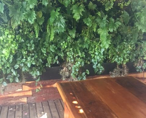 Wall hanging garden at Down to Earth restaurant in Plett